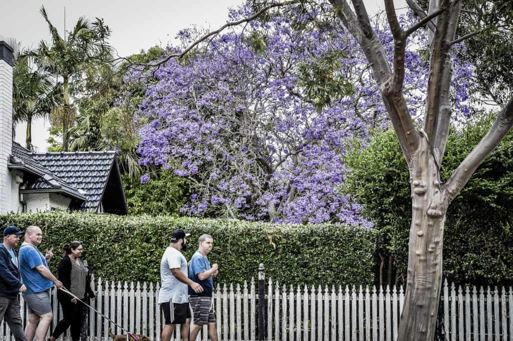 Bangor group home housemates enjoying a walk in the neighbourhood with a purple jacaranda tree in the background